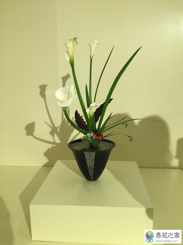 日本插花文化图片