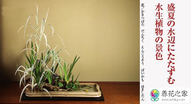 日本插花专业图片