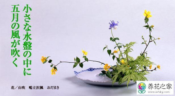 日本插花参考文献图片