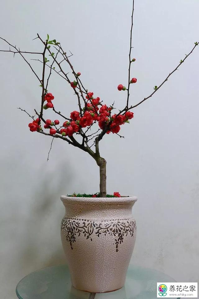海棠啥时候开花图片