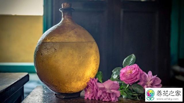 月季花能制香水吗