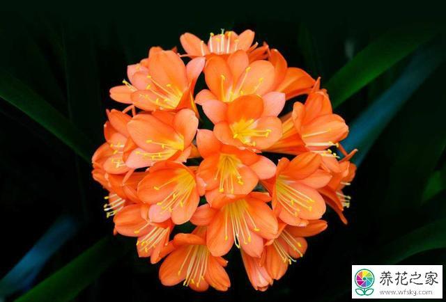 没有腐熟的花生壳放在花盆底部对花草有没有影响