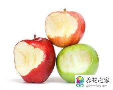 苹果扦插三角梅能行吗