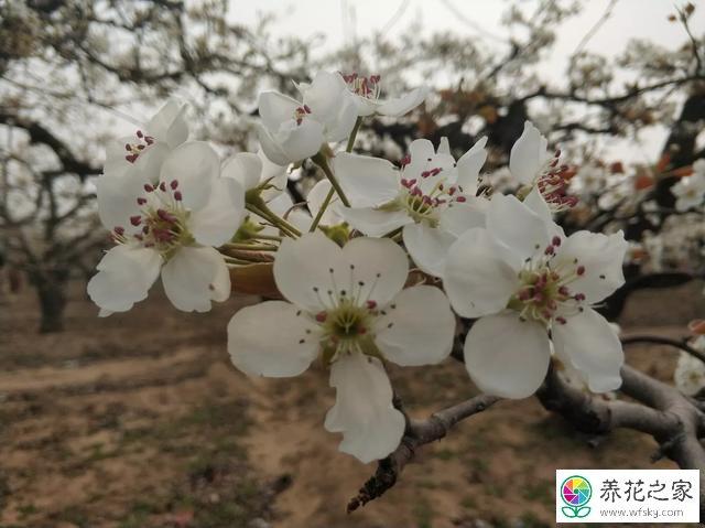 四月份都有什么花开花