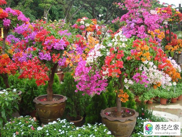春季有哪些开花花期长的植物