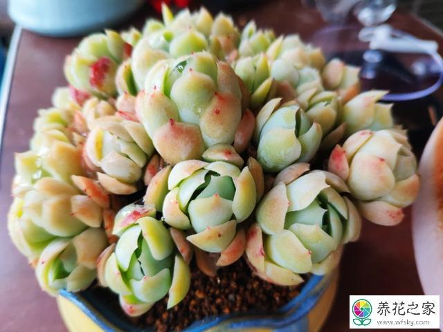 耐热耐旱的花卉有哪些