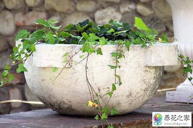 适合在室内种的盆栽有