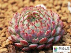 盆栽培养土的基本要求是什么