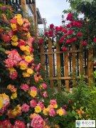 适合北方庭院种植好看又好养的花卉