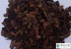网上买的松树皮能直接种兰花吗